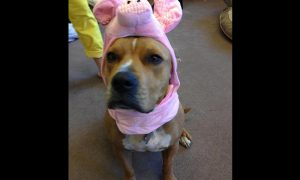 Penny in piglet costume